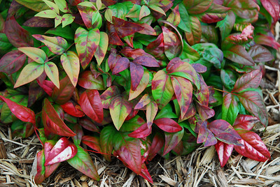 10-23-08.  Fall Foliage.