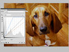 dog_wb_curves