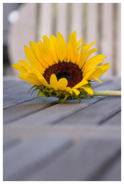 /Volumes/KIRKBRICKHD/FlowerPics/Export/FlowerPics02