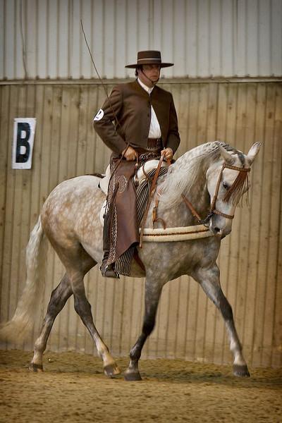 Horseguy2
