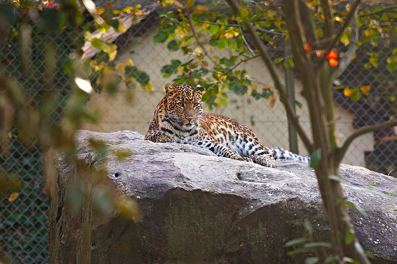tiger-RAW_Photo_Processor