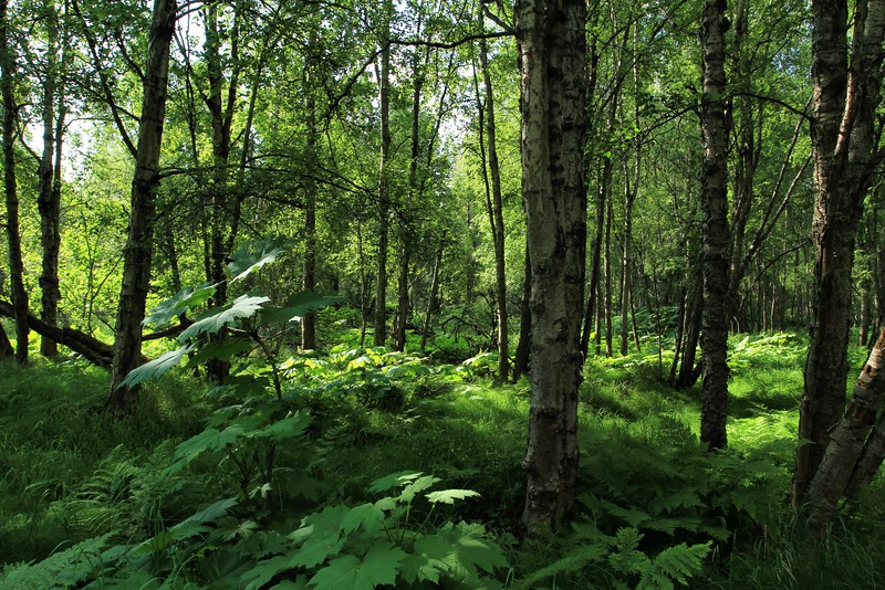 June 19, 2015.  Lush green forest