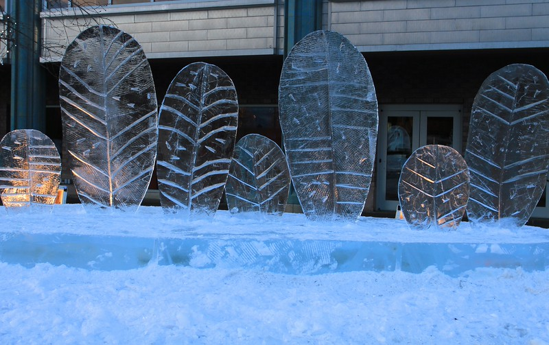January 11, 2015.  Ice carvings in Town Square