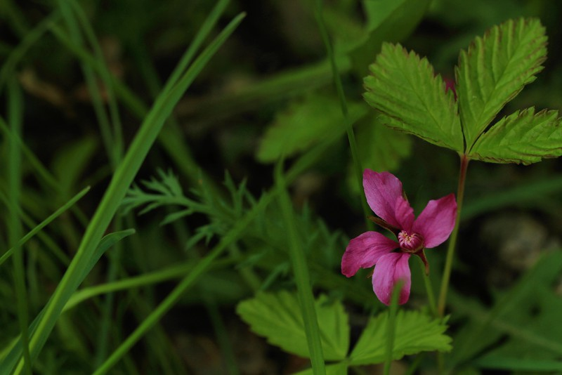 May 27, 2015.  Pink flower