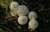 July 24, 2015.  Mushrooms along the Coastal Trail