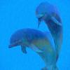 Photo-Art Dolphin