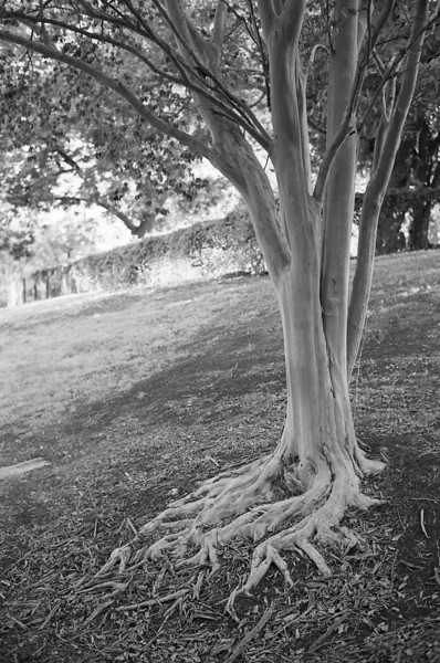 Roots<br /> Voigtlander R4a with CV40/f1.4