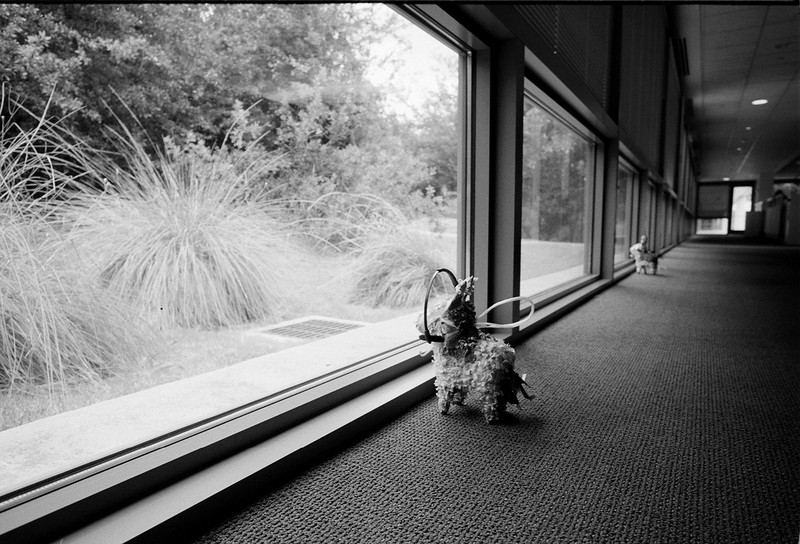 Tiny Piñatas keeping watch. Very good for protection unless there are kids with broomsticks around.<br /> Voigtlånder R4a - 21/4<br /> Fuji Neopan 100