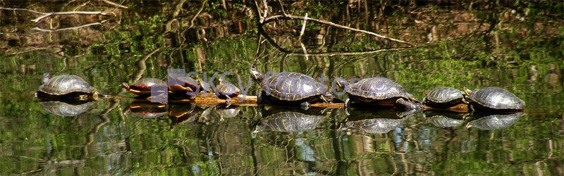 Reflecting Turtles