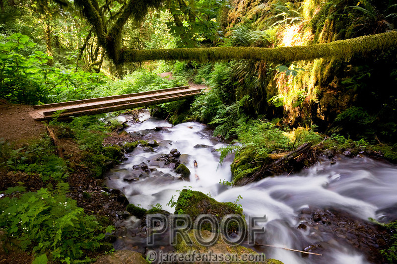 """""""Hiking Wahkeena Falls Trail in the Columbia River Gorge""""<br /> <br /> After hiking past Wahkeena Falls the trail continues for about a mile until you reach this lush tropical area.  This photograph captured what I would expect to find in the remote Amazon Rain Forest (minus the bridge of course.)"""