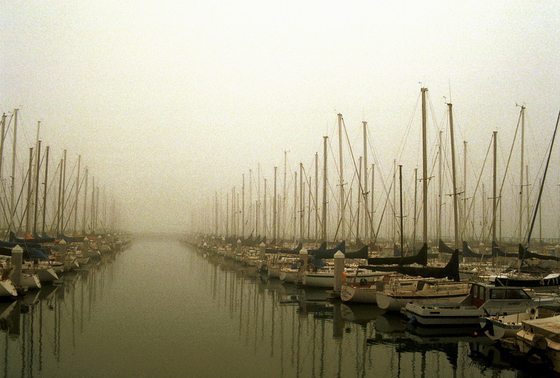 Early morning fog kisses hundreds of sailboats at South Beach Harbor in San Francisco bay.
