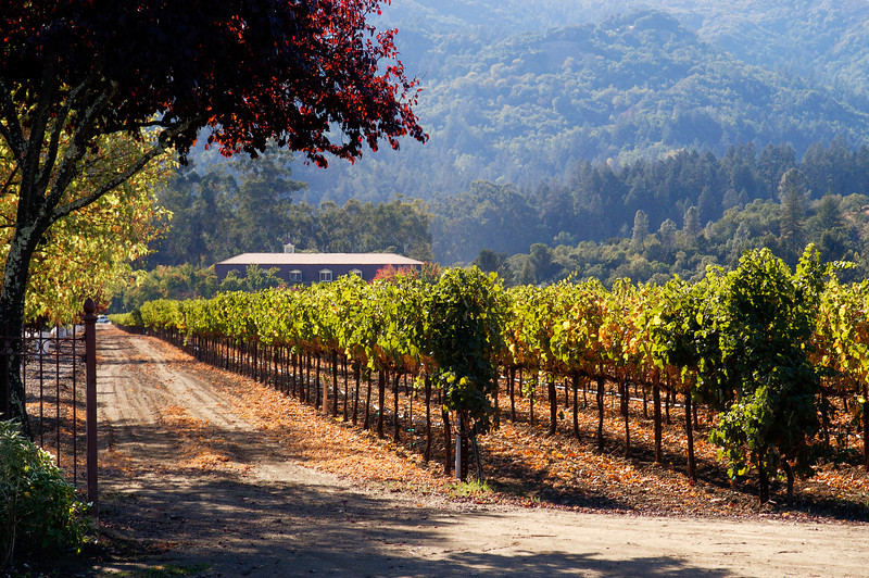 Beautiful Niebaum-Coppola vineyards nestled in historic Napa Valley in the enchanting city of Rutherford, CA.