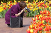 Picking the perfect tulip out of a crowd