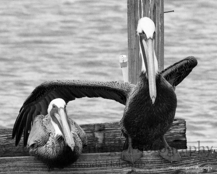 You're my friend. by Rhonda Holcomb-Happenings Photography<br /> Copyright 2008<br /> Surfside, TX