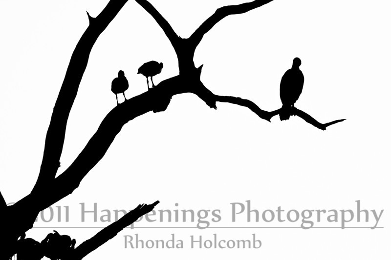 Three Birds in a Tree possibly Five by Rhonda Holcomb