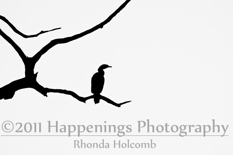 One Bird in Tree by Rhonda Holcomb