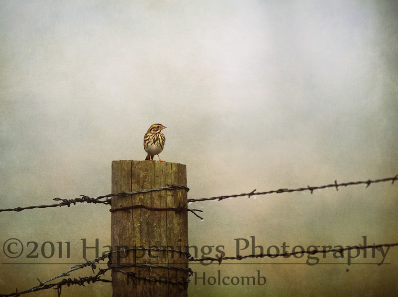 Warbler on a Stump by Rhonda Holcomb<br /> Copyright 2009