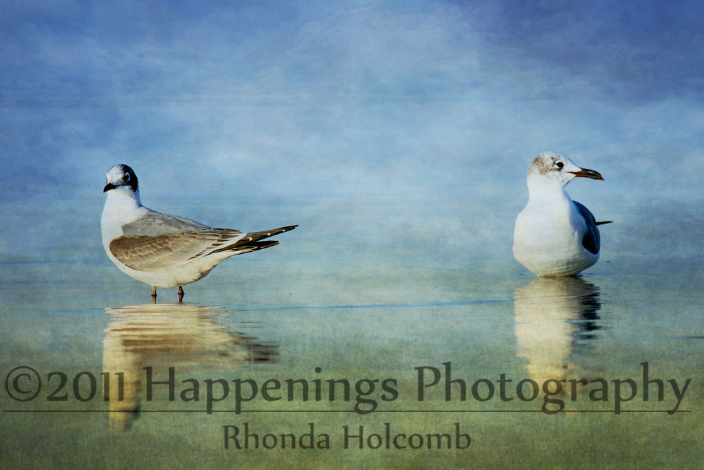 Propinquity <br /> by Rhonda Holcomb<br /> Copyright 2009<br /> This looks great in Metallic Finish.