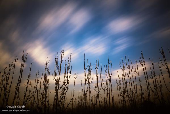 Sky in motion II