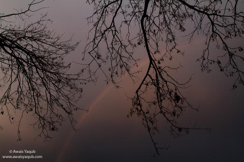 A rainbow and tree