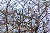 Winter Tangle. I am taken by the busyness of this photograph and the levels of focus through the image.