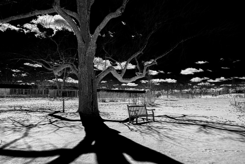 Winter shadows on the Ides of March - BW (IR) version 4