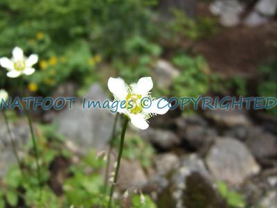 one lovely white Flower