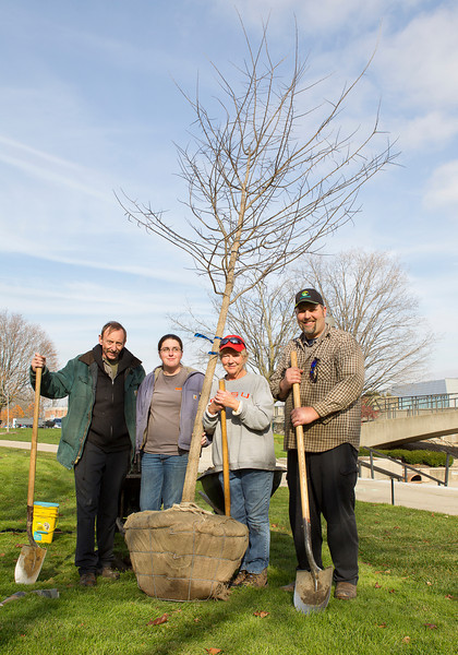 Campus Groundskeeping planting centennial trees