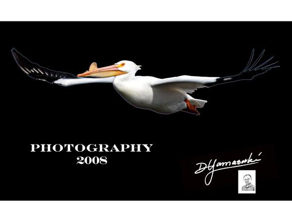 Photography 2008