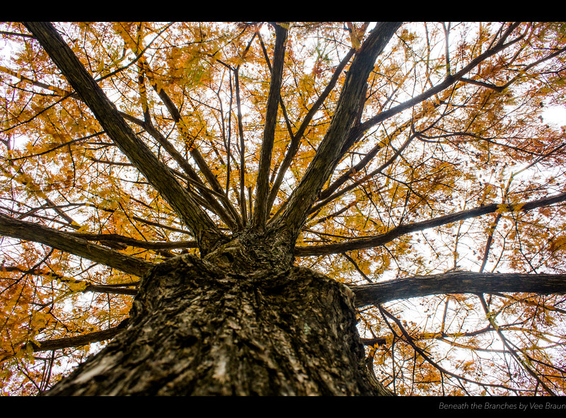 Beneath the Branches by Vee Braun