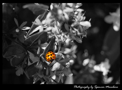 LadyBug spot of Color By Spencer Macabare