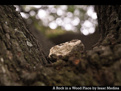 A Rock in a Wood Place by Isaac Medina
