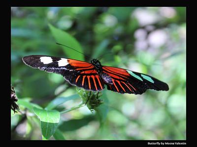 Butterfly by meena
