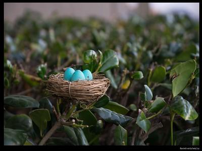 Blue bird's nest by Yarely Cruz