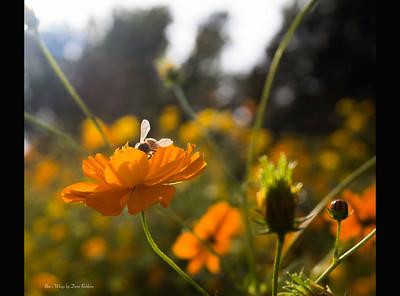 Bee's Wings by Demi Robbins