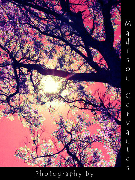 Pink Tree By Madison Cervantes2
