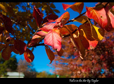 Fall is in the Air by Taylor Piper