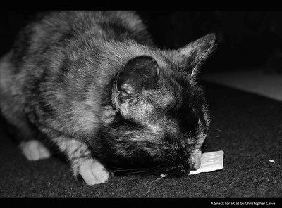 A Snack for a Cat by Christopher Calva