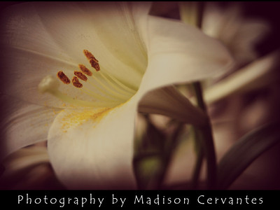 Flower2 By Madison Cervantes