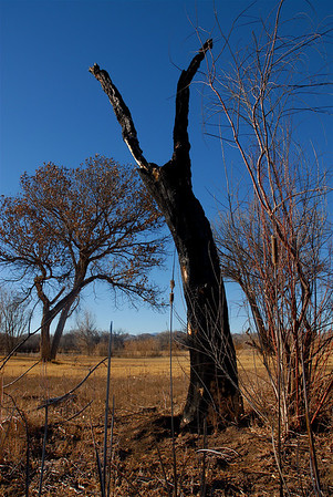 """Woman in the Tree, #2"" New Mexico"