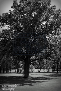 tree picture black and white #2