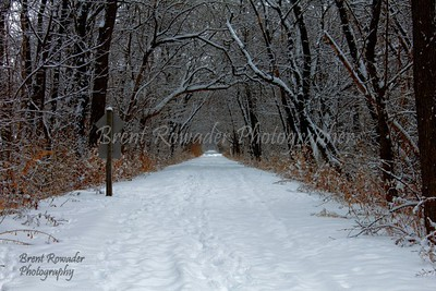 snow on path