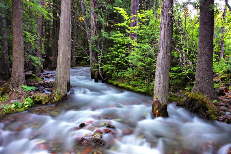 Sprague Creek, Glacier National Park