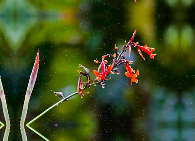 Raindrops in Costa Rica.  Picture set for wrap-around canvas!