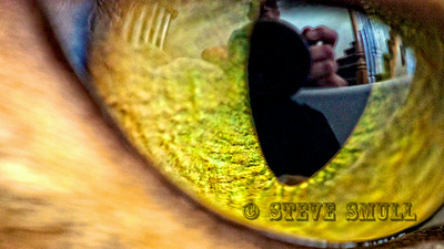 Self portrait (reflected in cat's eye)