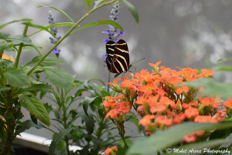 Rain Forest in Moody Gardens, Galveston, TX