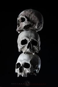 Human Skulls stacked