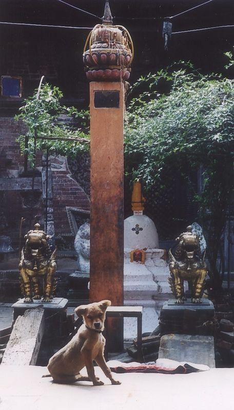 Shrine Puppy, Bhaktapur, Nepal
