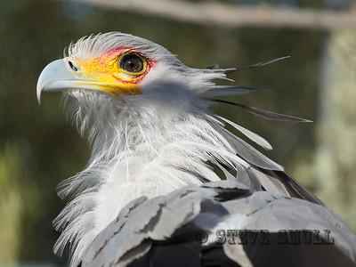 Secretary Eagle