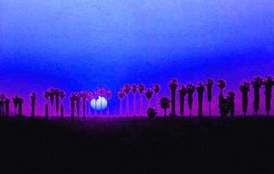 YumaPalms,march1990D